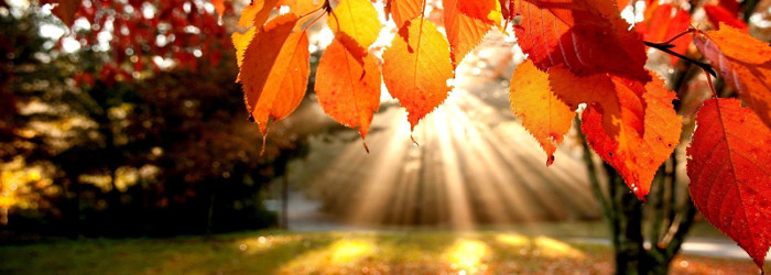 autunno-vino-rosso
